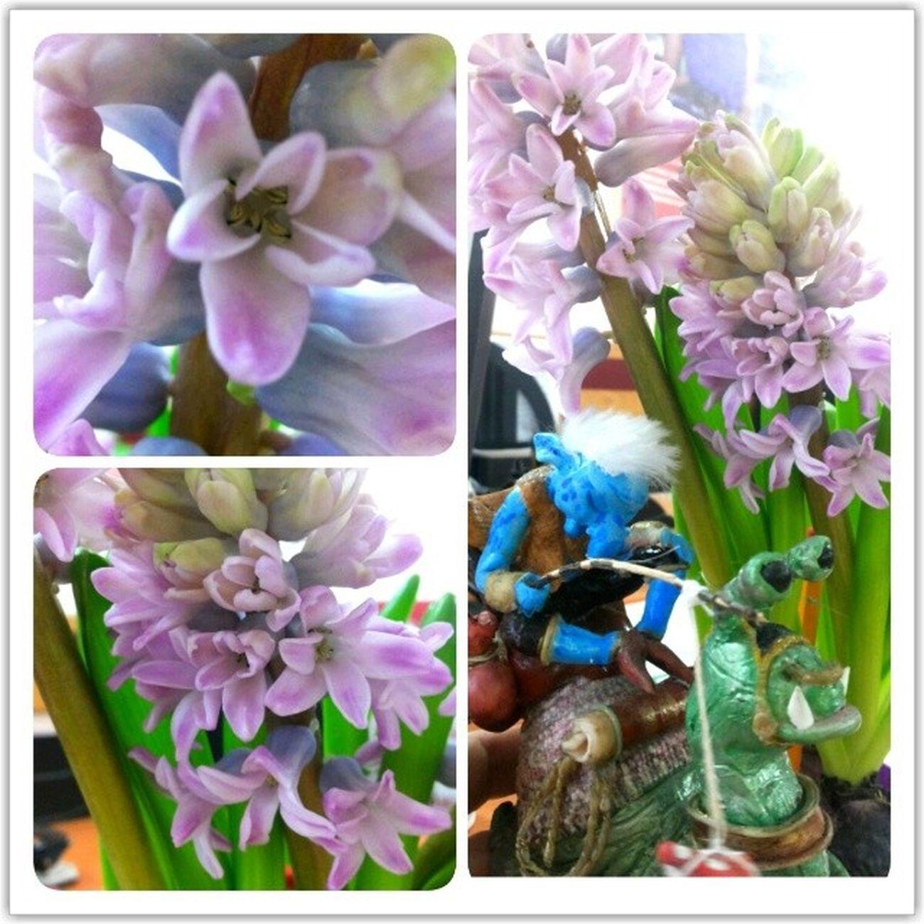 Переключаемся в режим весна ! запах потрясающий на весь офис , организм отказывается работать и требует праздника!