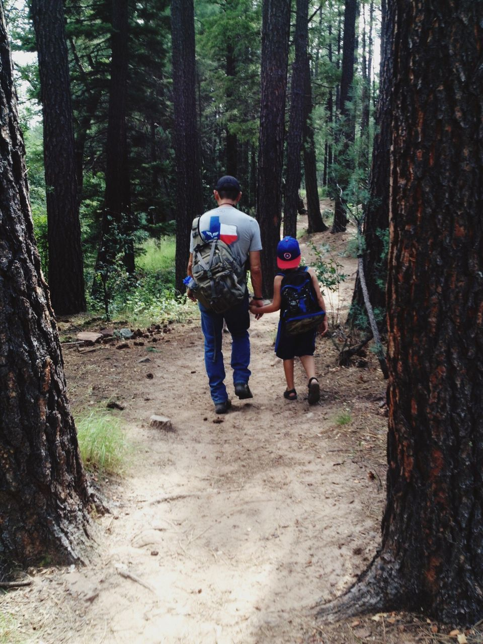 forest, tree, rear view, tree trunk, hiking, backpack, walking, adventure, footpath, leisure activity, nature, full length, woodland, real people, day, togetherness, exploration, senior adult, men, two people, outdoors, lifestyles, women, friendship, beauty in nature, people, adult, adults only