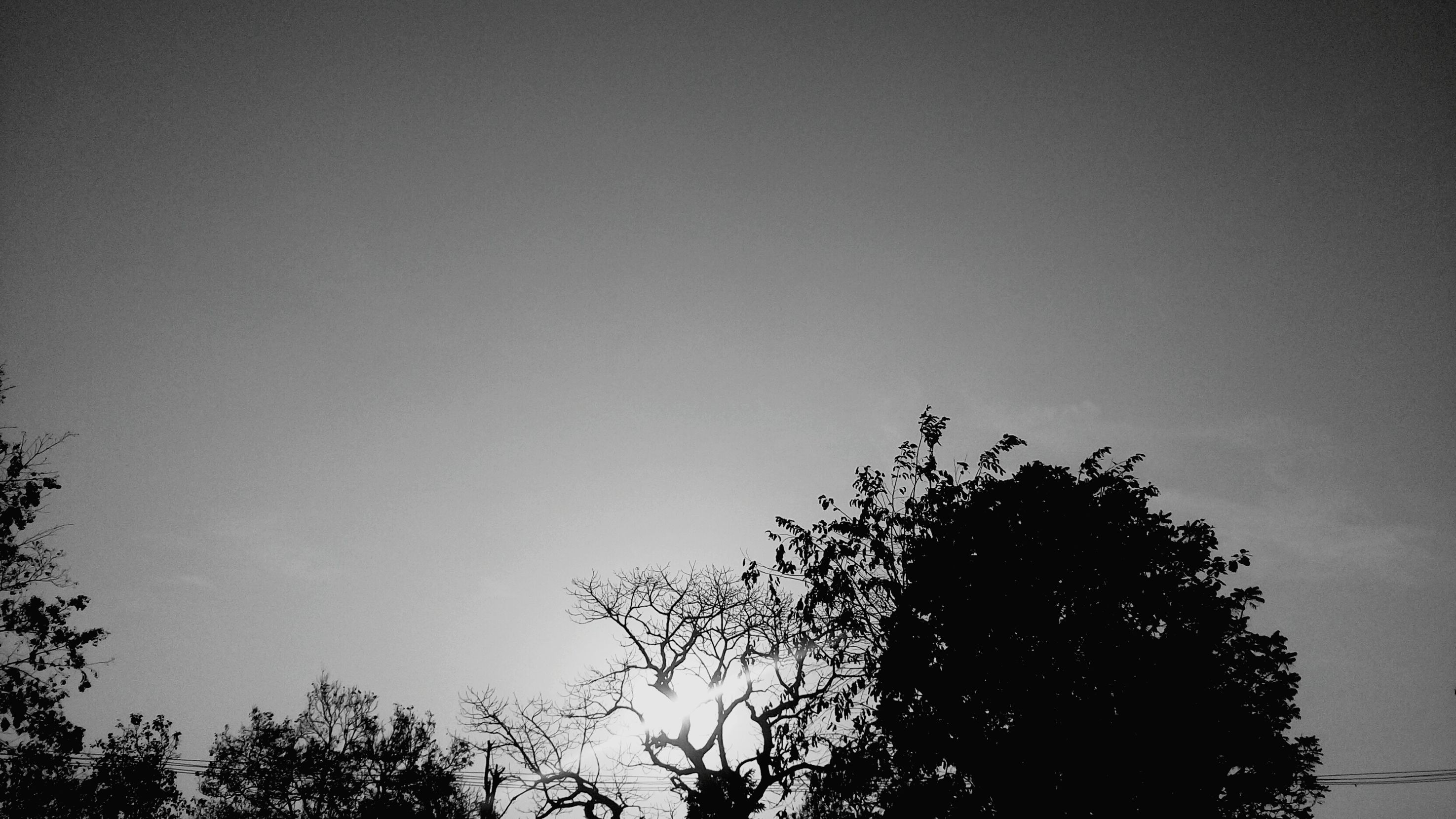 Evening Sun Black & White