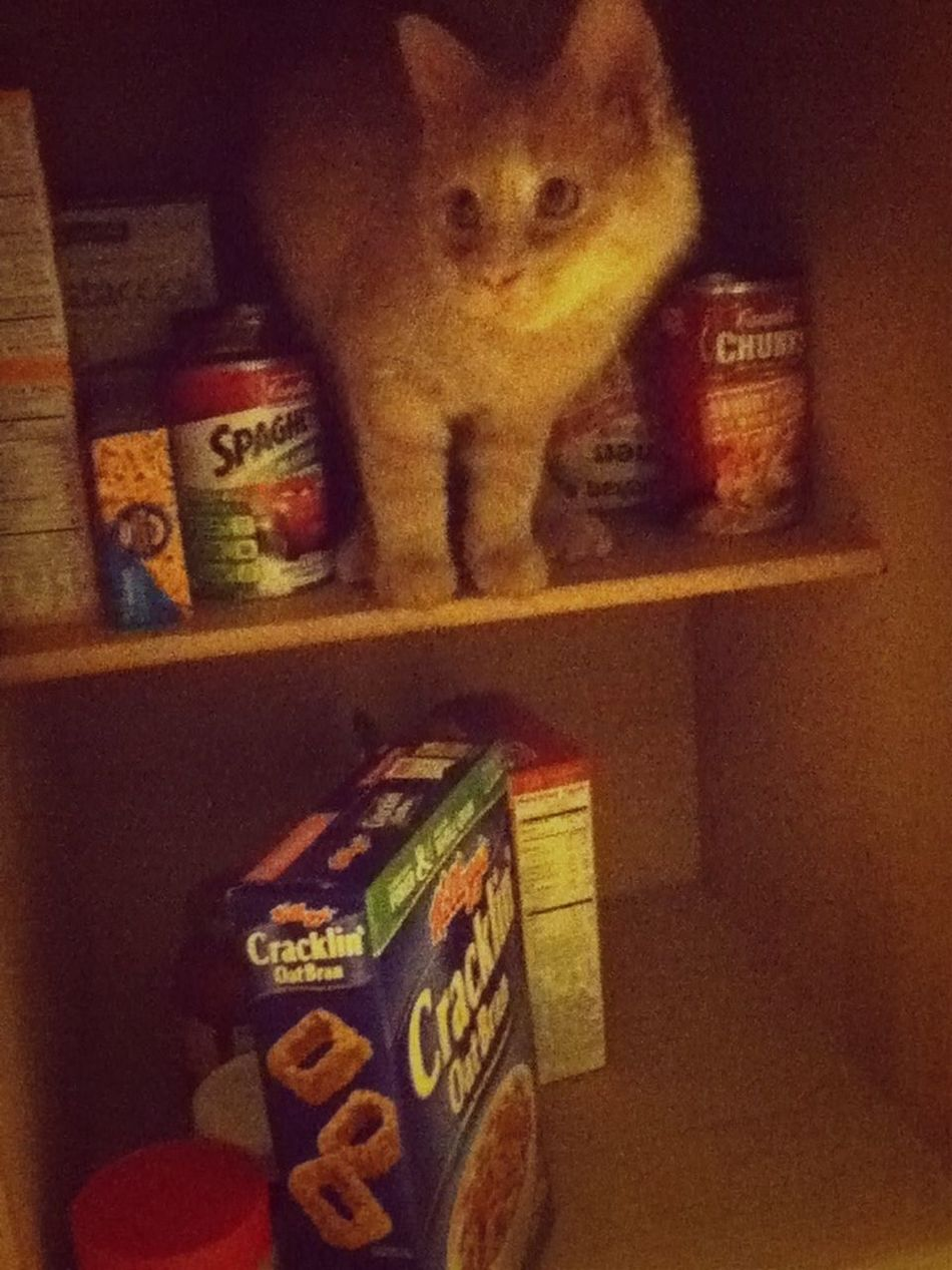 Caught in action! He likes to hang out in my cupboards