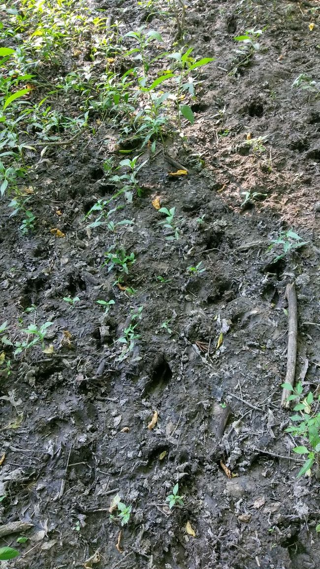 The Purist Patterns In Nature Deer Tracks Nature Walk Sunlight And Shadow Join The Herd We Are Nature