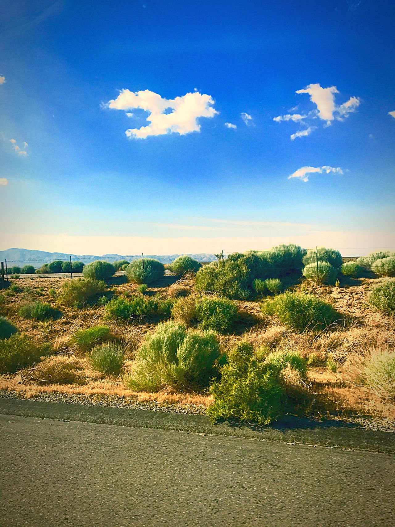 Sky Tranquility Nature Beauty In Nature Cloud - Sky Tranquil Scene Scenics No People Day Landscape Growth Tree Field Outdoors Blue Grass Road Sagebrush