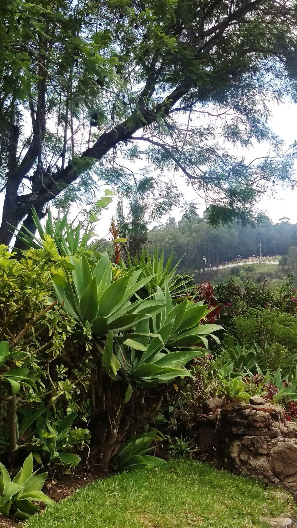 A different view. Antigua, Guatemala Convento De Caupichinas Adventure Club