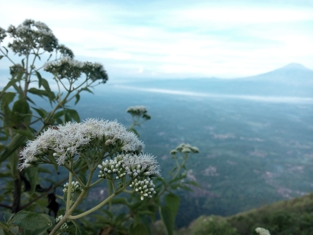 nature, growth, beauty in nature, plant, no people, sky, outdoors, scenics, landscape, flower, day, mountain, close-up