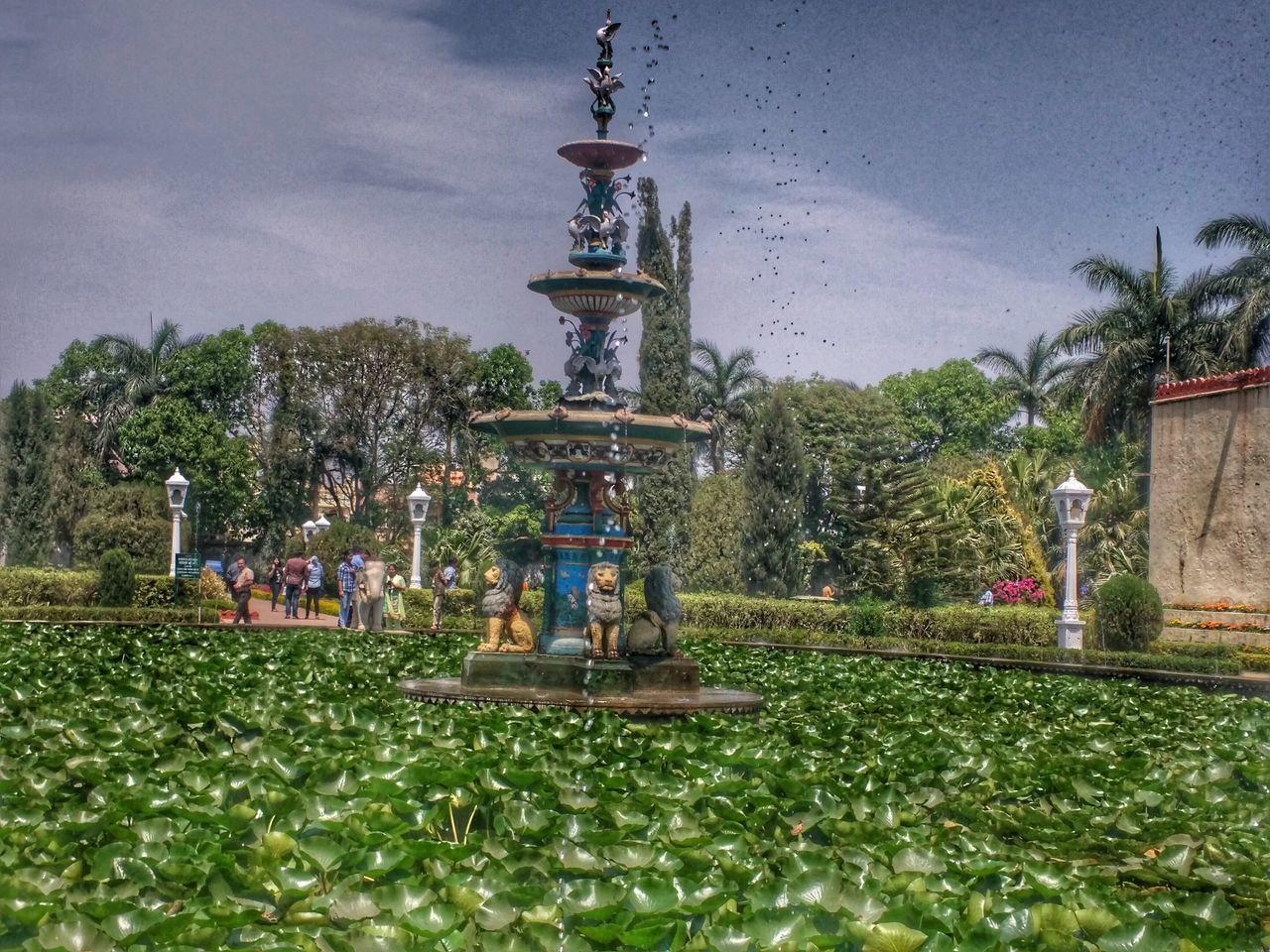 Lotus Pond Fountain_collection Eyeem Garden Garden Photography Eyeem Photography EyeEm Gallery Eyeem Market EyeEm Team EyeEm Best Shots - Landscape EyeEm Best Shots - Nature EyeEmbestshots EyeEm Best Shots - Architecture Urban Spring Fever
