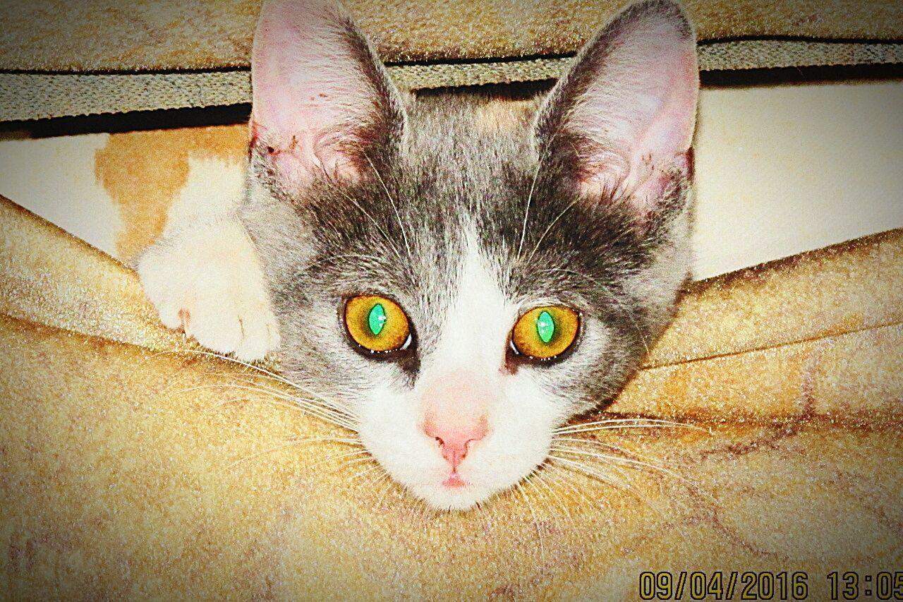 Cat Gato😽 Mascota Balcarce, Argentina Animal Day