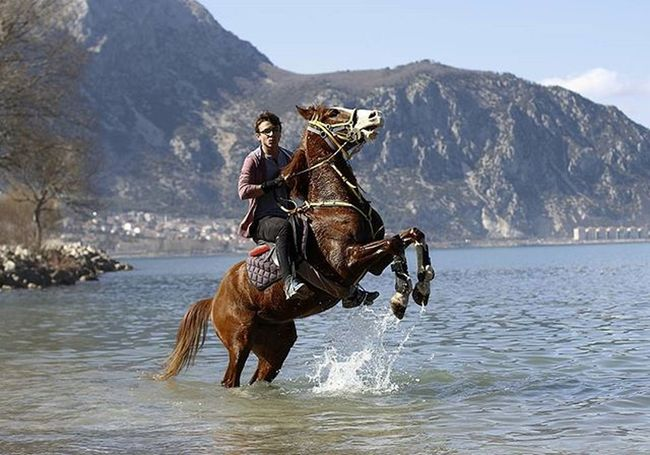 Portre Portrait Horse Eğirdir Turkey