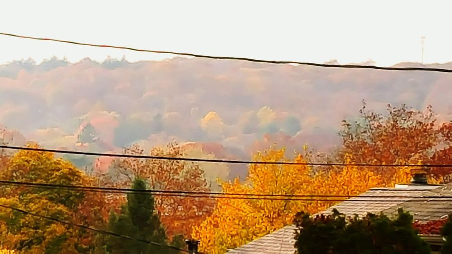 First Eyeem Photo Autumn Colors Autumn Leaves Autumn🍁🍁🍁 Jaynes Hill Walt Whitman Huntington Ny Colorful Trees