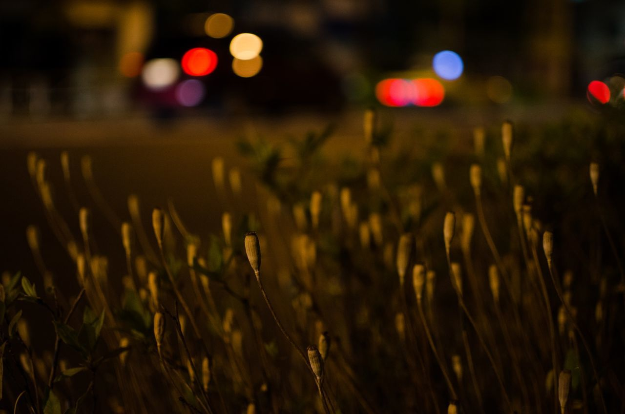 night, illuminated, no people, outdoors, field, growth, nature, close-up, beauty in nature
