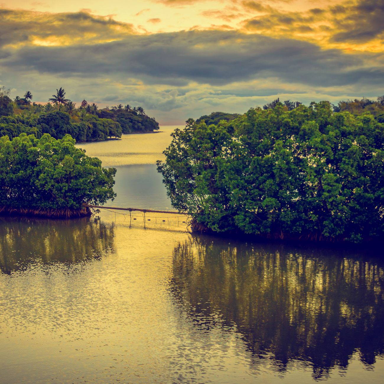 Nature On Your Doorstep Tombeau River mangrove forest at Sunset Mauritius IPSNatural