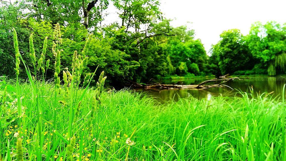 Goodday Natura Poland Warsaw Stolica Park Skaryszewski Drzewa World