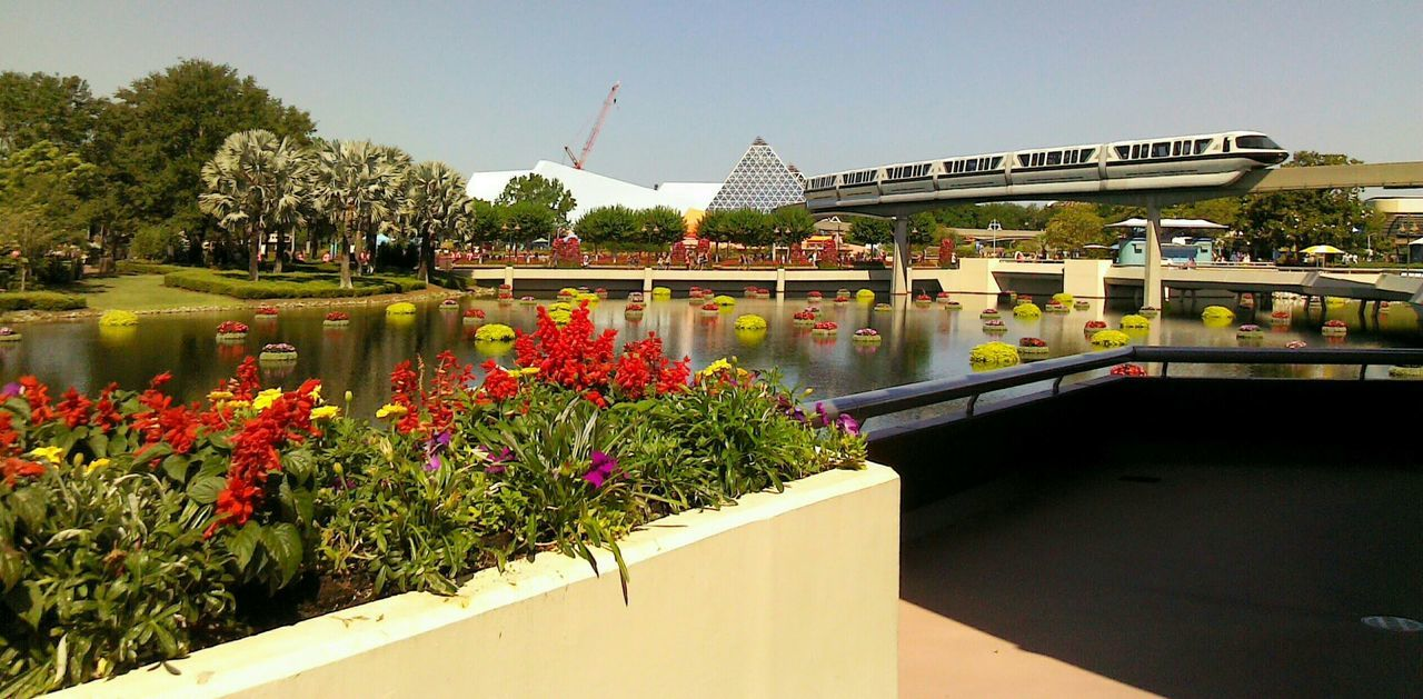 Hanging Out At Epcot  Taveling Enjoying Life Landscape Plants And Flowers