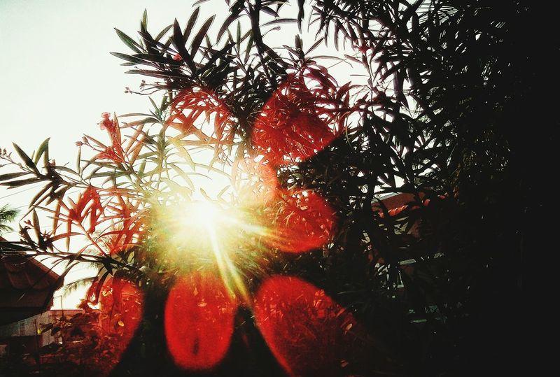 Sun Light And Shadow Ray Flair Red Htconee9