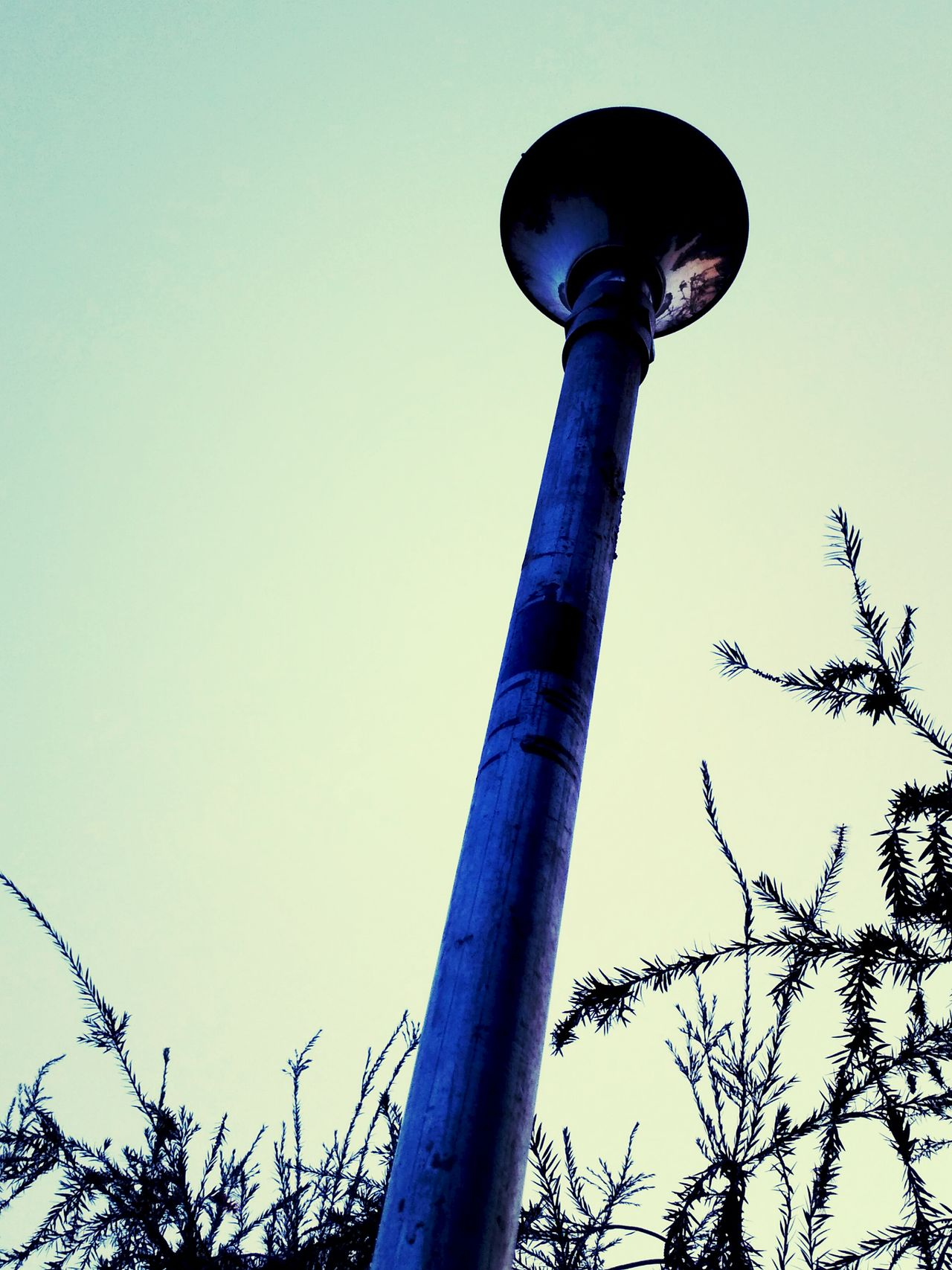 Street Light Streetphotography Sky Nature Outdoors No People Low Angle View