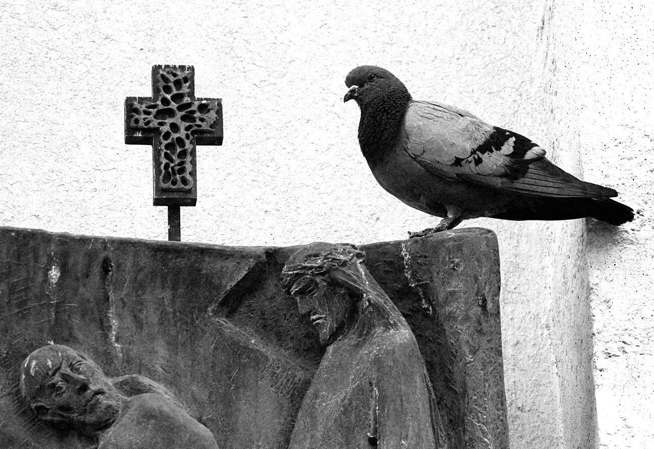 Shades Of Grey ( Vatikan)