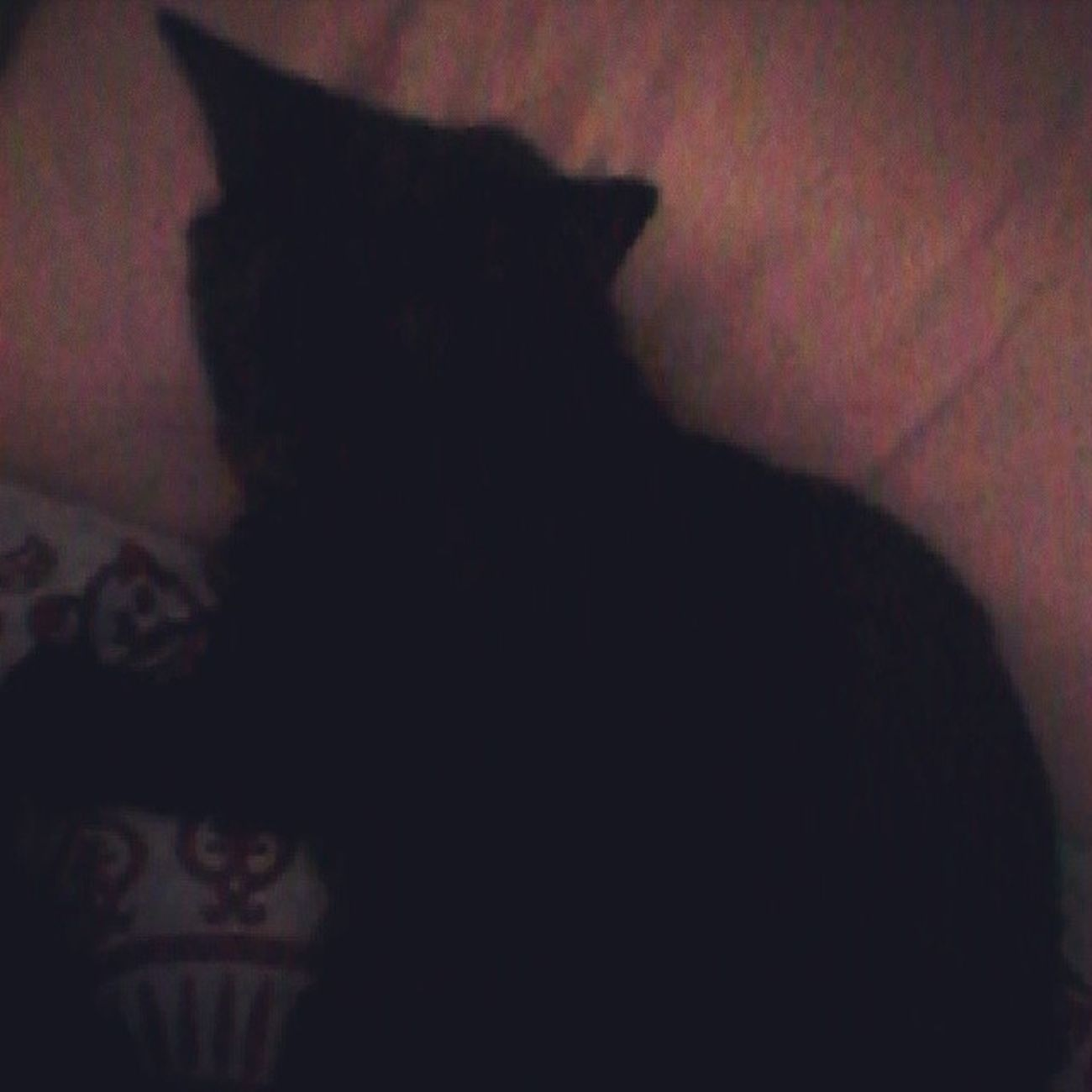 Bagheerah Catsofinstagram Lazycatdaze Facelesscats familiar babyboy babypanther vicious blackcats