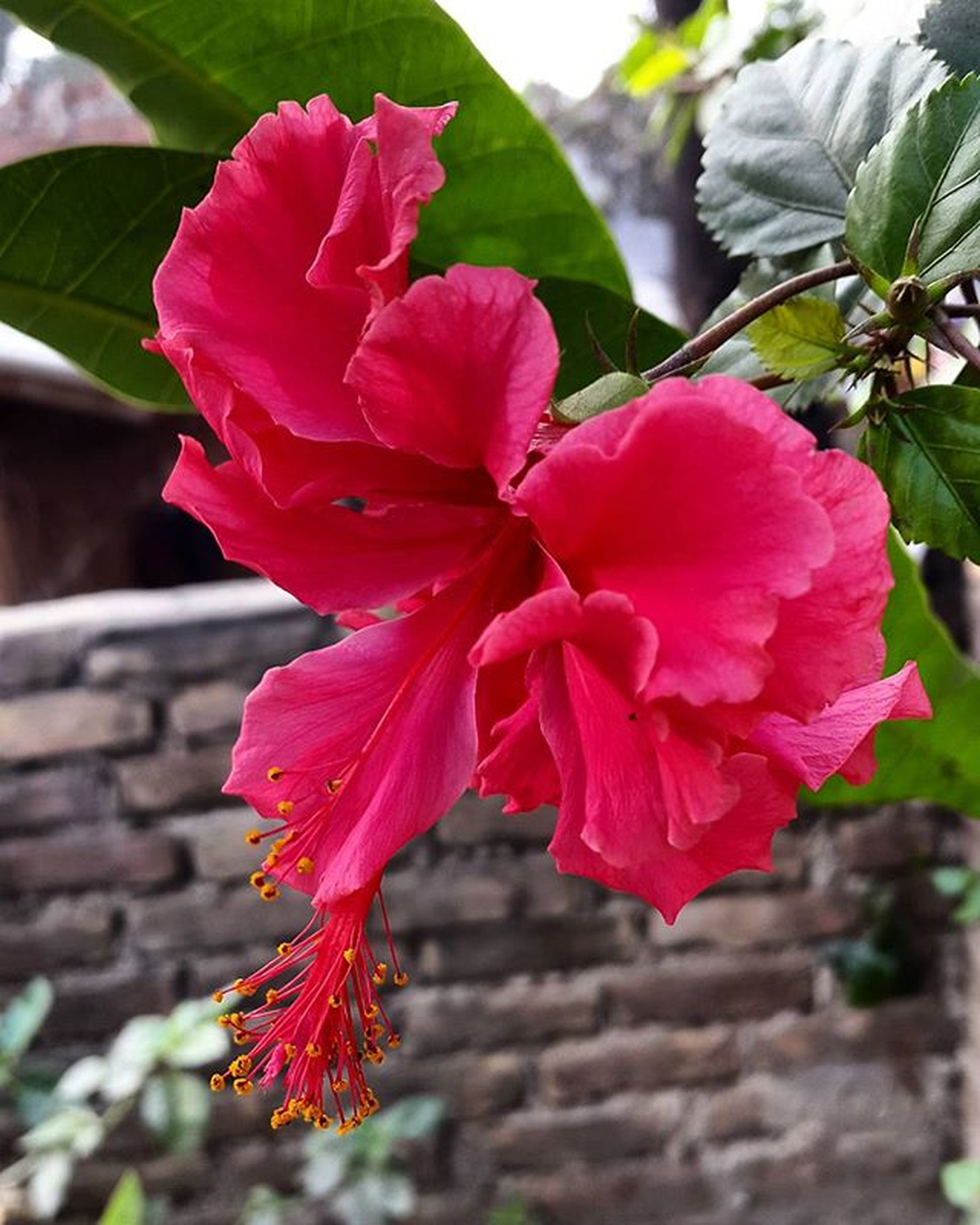 flower, petal, freshness, fragility, flower head, pink color, close-up, growth, beauty in nature, focus on foreground, red, blooming, nature, plant, leaf, in bloom, rose - flower, day, pink, blossom