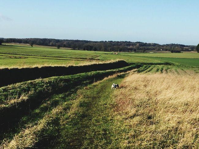 Countryside Norfolk
