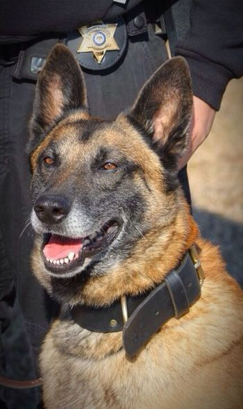 Always looked like he was so happy and smiling! Pet Police RIP :( Rip