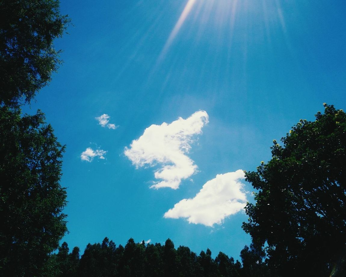 Tree Sky Low Angle View Blue Nature Beauty In Nature Sunbeam No People Cloud - Sky Outdoors Tranquility Scenics Sun Day Dia Nature Beauty In Nature Tree Arboles , Naturaleza Chile Sur Arboles Water Growth Tranquil Scene Verde