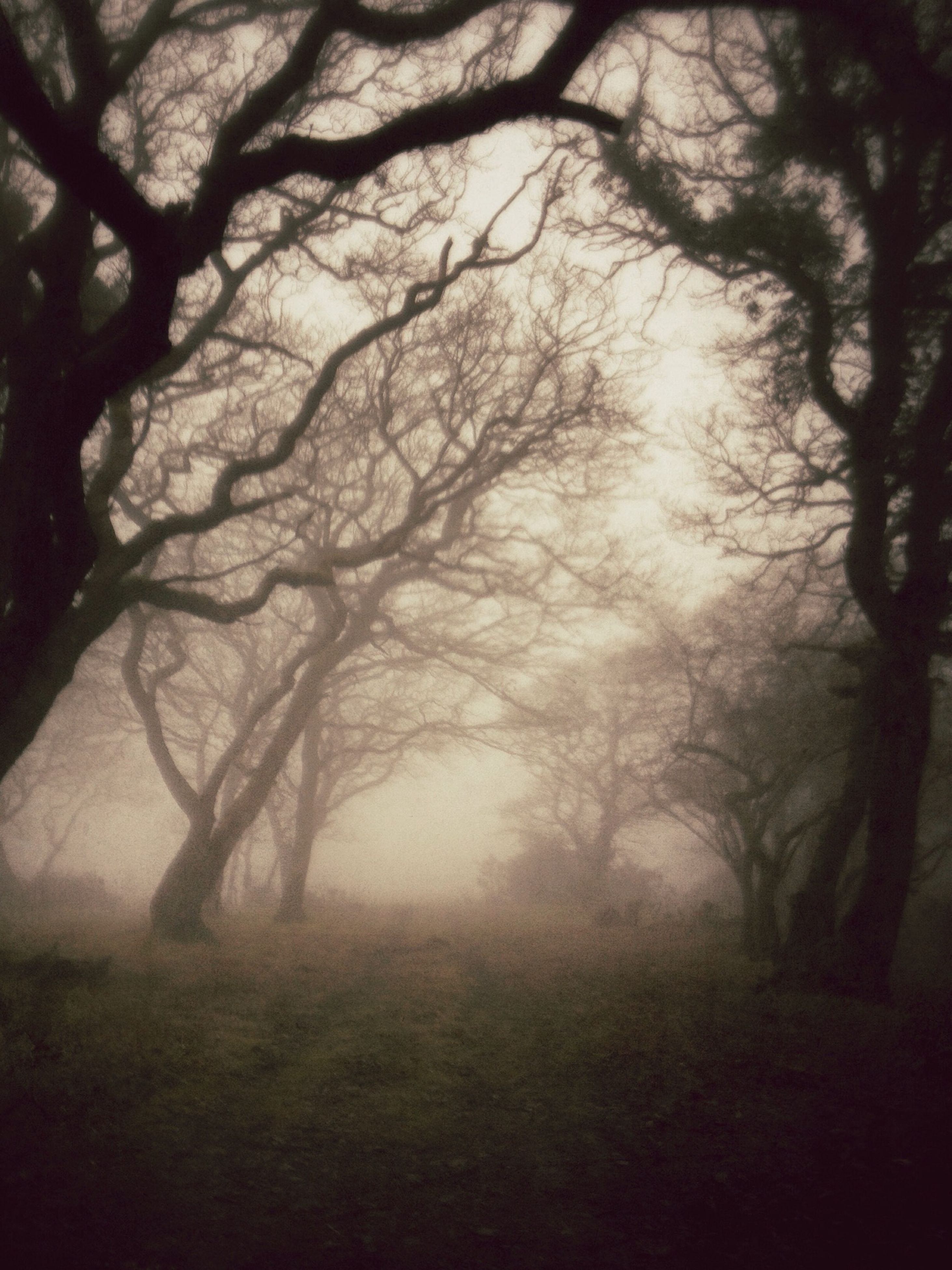 tree, bare tree, branch, fog, tranquility, foggy, tranquil scene, nature, beauty in nature, silhouette, scenics, tree trunk, growth, landscape, forest, no people, non-urban scene, outdoors, weather, sky