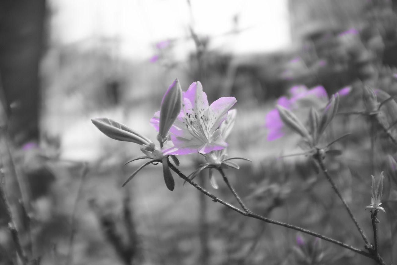 Daily Life Snap Photo Monochrome Mono Monopurple FujiX100T X100t Fujifilm Landscape