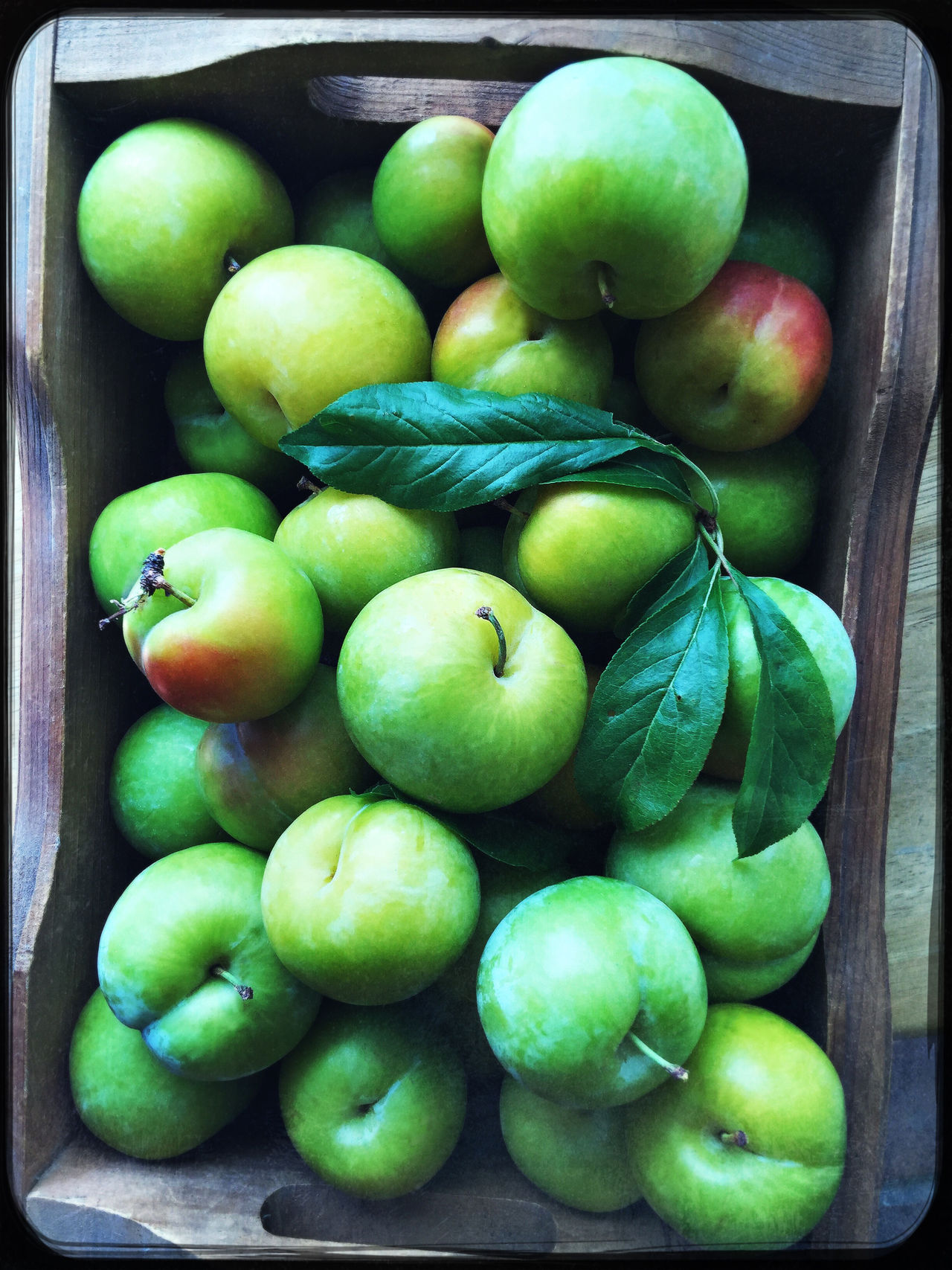 Summer plums in wooden box Abundance Abundance Of Box Close-up Fresh Fruits Green Color Harvest Healthy Eating Indoors  Leaves Natural Light Nobody Organic Overhead Phone Camera Plums Produce Ripe Several Snacks Snapshots Of Life Summer Sweet Textures Wood - Material
