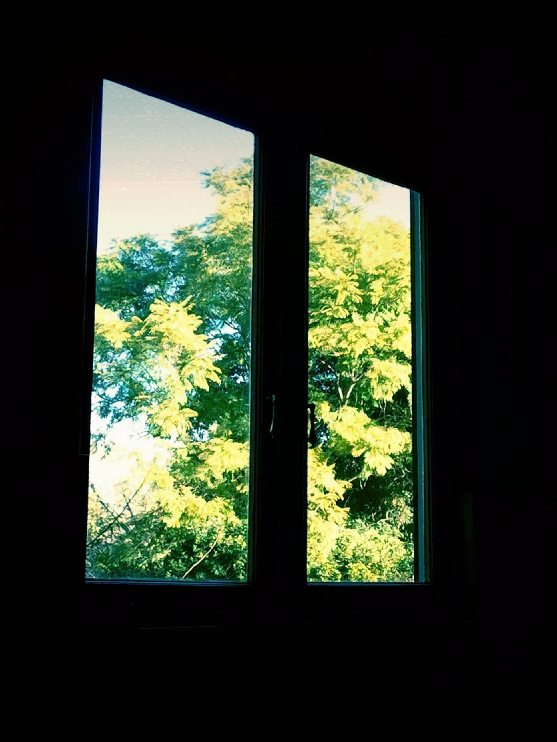 window, indoors, glass - material, transparent, tree, home interior, looking through window, growth, sky, plant, nature, house, silhouette, sunlight, day, dark, no people, beauty in nature, tranquility, landscape