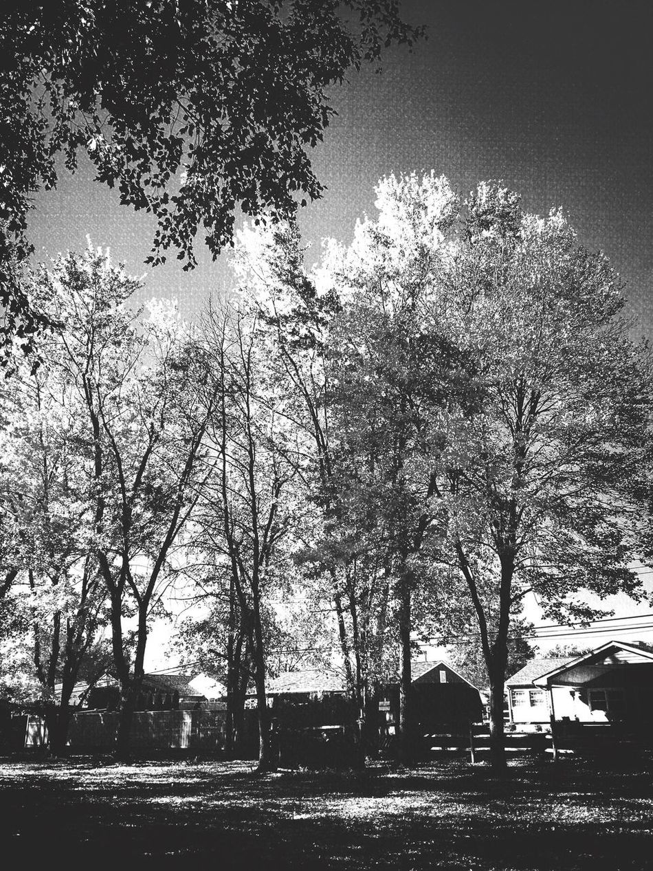 Fall in black and white Treescape Tree Nature Outdoors No People Tranquility Sky Branch Growth Beauty In Nature Scenics Woods Relaxedand Happy Taking Pictures Iphonephotography Blackandwhite Photography Forest
