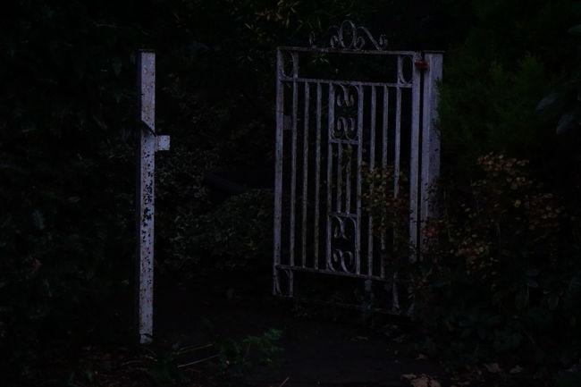 Dark Gate Night No People Old Gate Outdoors Tree White Gate