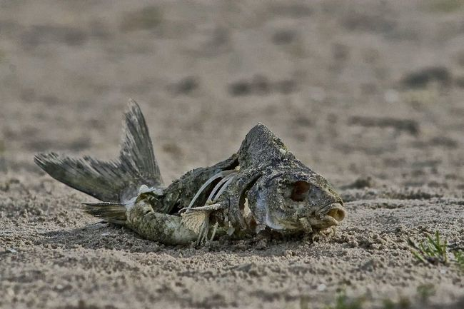 Sunbathing Relaxing On The Beach Fish First Sale DEAD FISH Afterlife Just Lying Around Being Lazy At The Beach