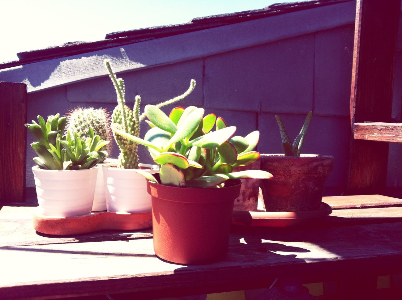 Creative Light And Shadow In Memoriam Moralzarzal Cactus Terrace Terraza Spain♥