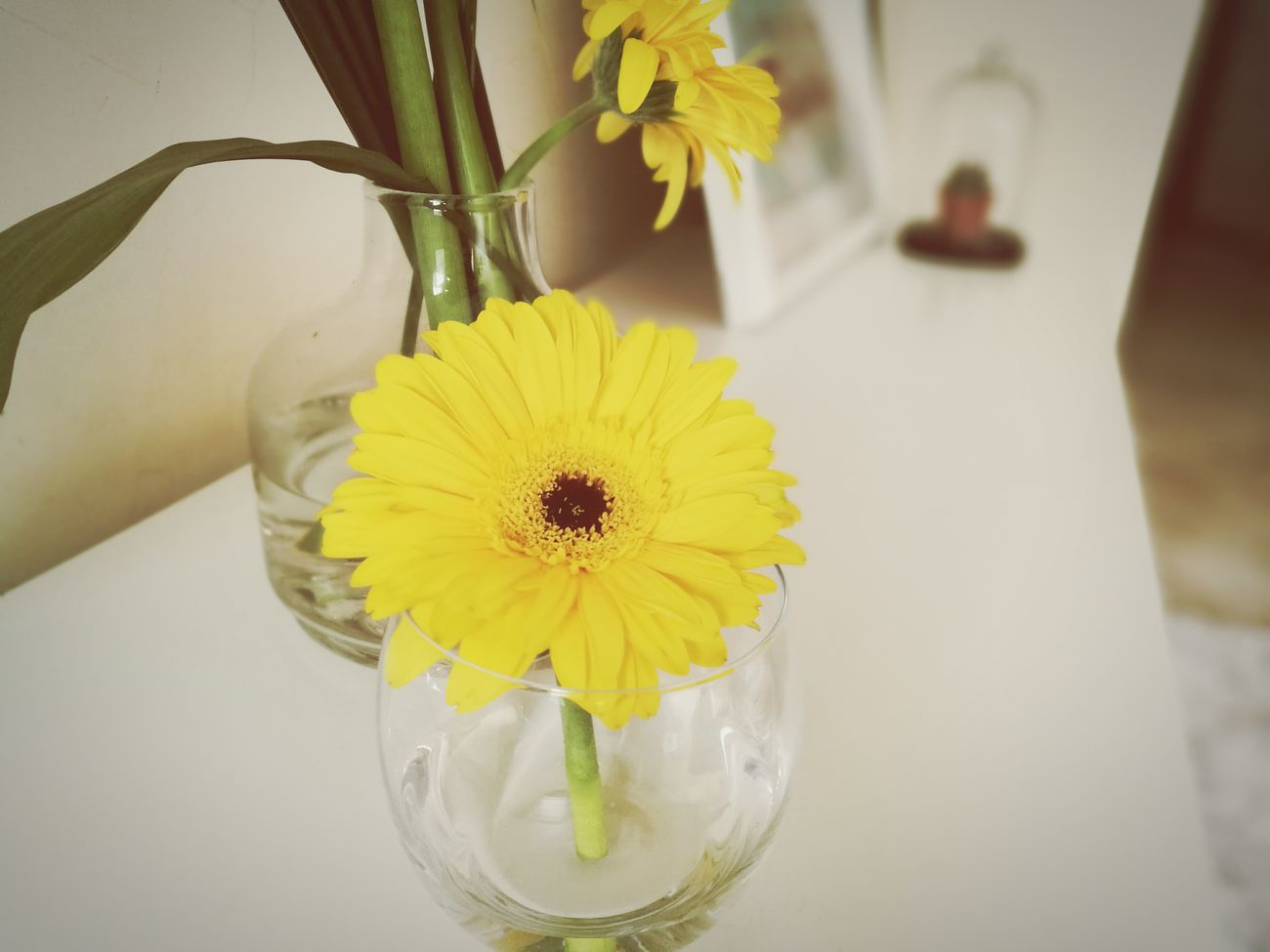 I took this picture at a friend's place, the flower suddenly broke down and it made me realize how sometimes we break from others to stand out, even if it would mean we only gonna last less time. Yellow Flower Flower Head Petal Nature Plant Fragility Close-up Pollen Beauty In Nature Daisy Growth Indoors  Freshness No People Sunflower Day Morocco 🇲🇦 Leaf Nature