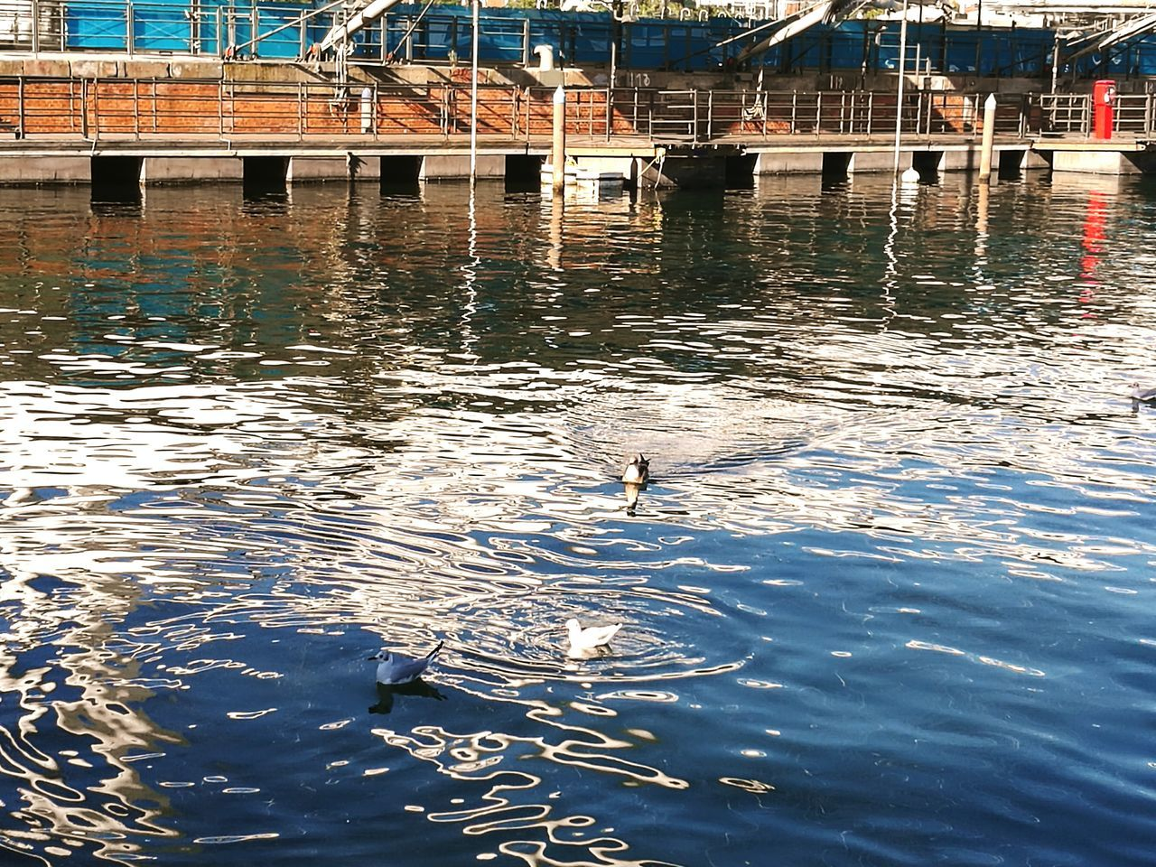 water, animal themes, bird, animals in the wild, waterfront, reflection, day, animal wildlife, one animal, rippled, no people, nature, architecture, built structure, outdoors, lake, building exterior