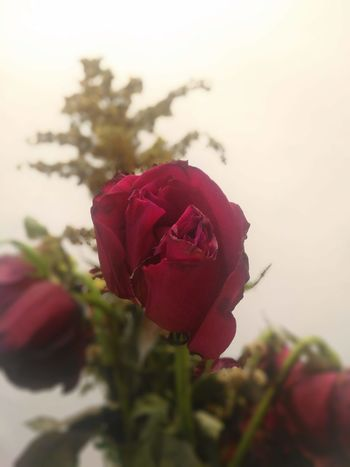 Eyemphotography Rosé Life In Death Hello World Bye World