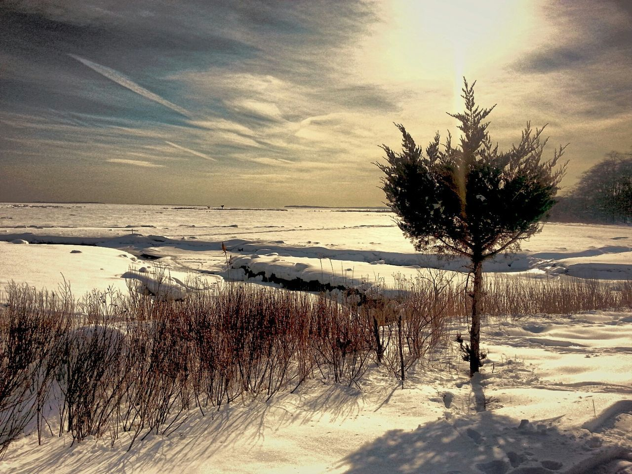 winter, cold temperature, snow, nature, scenics, beauty in nature, tranquility, tranquil scene, sky, tree, frozen, no people, outdoors, sunset, landscape, bare tree, water, day, horizon over water
