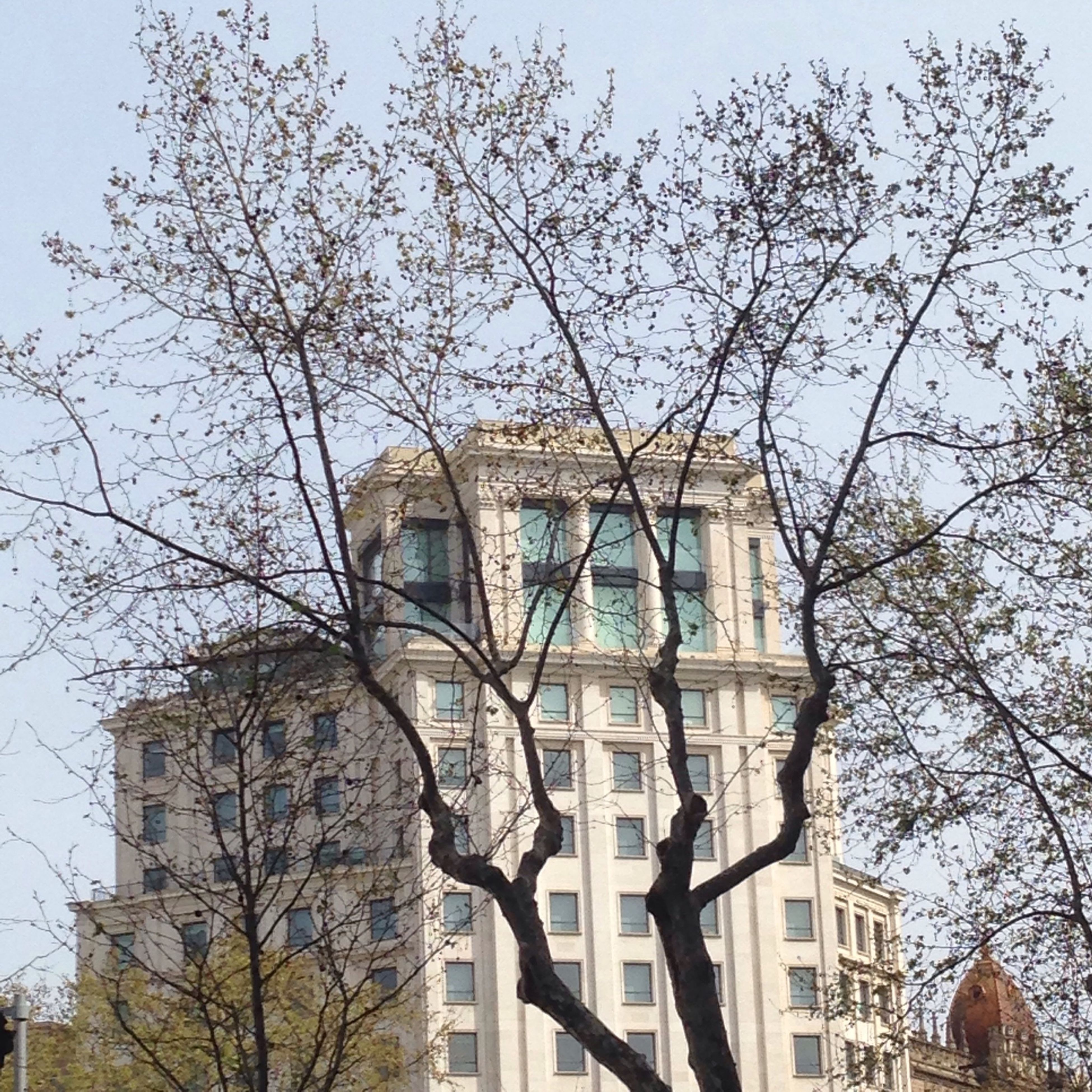architecture, building exterior, built structure, low angle view, tree, branch, bare tree, window, sky, clear sky, building, house, residential building, residential structure, day, outdoors, no people, city, facade, blue