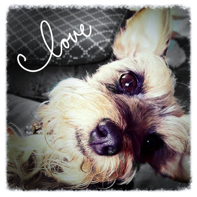 Begging for love... My Dog Is Cooler Than Your Kid. Cute Pets Dogslife Dog Days Dog Casa Presto Relaxing