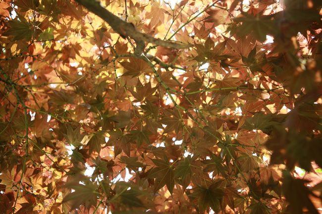 산을 담다 | Brown Spring Leaf 🍂 Yellowbrown 바른생태살림원 태 Barunecos | be the Nature