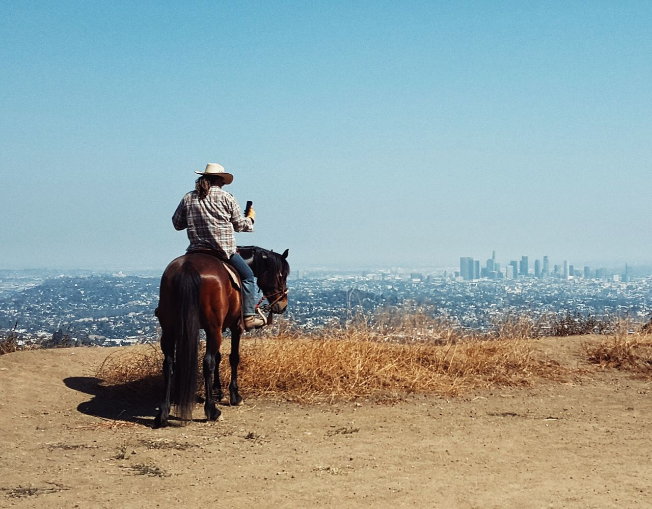 Beautiful stock photos of cowboy, Animal Themes, Casual Clothing, Cattle, City