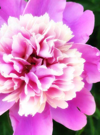 Softness Smoth Flower Macro Summer You Feel It