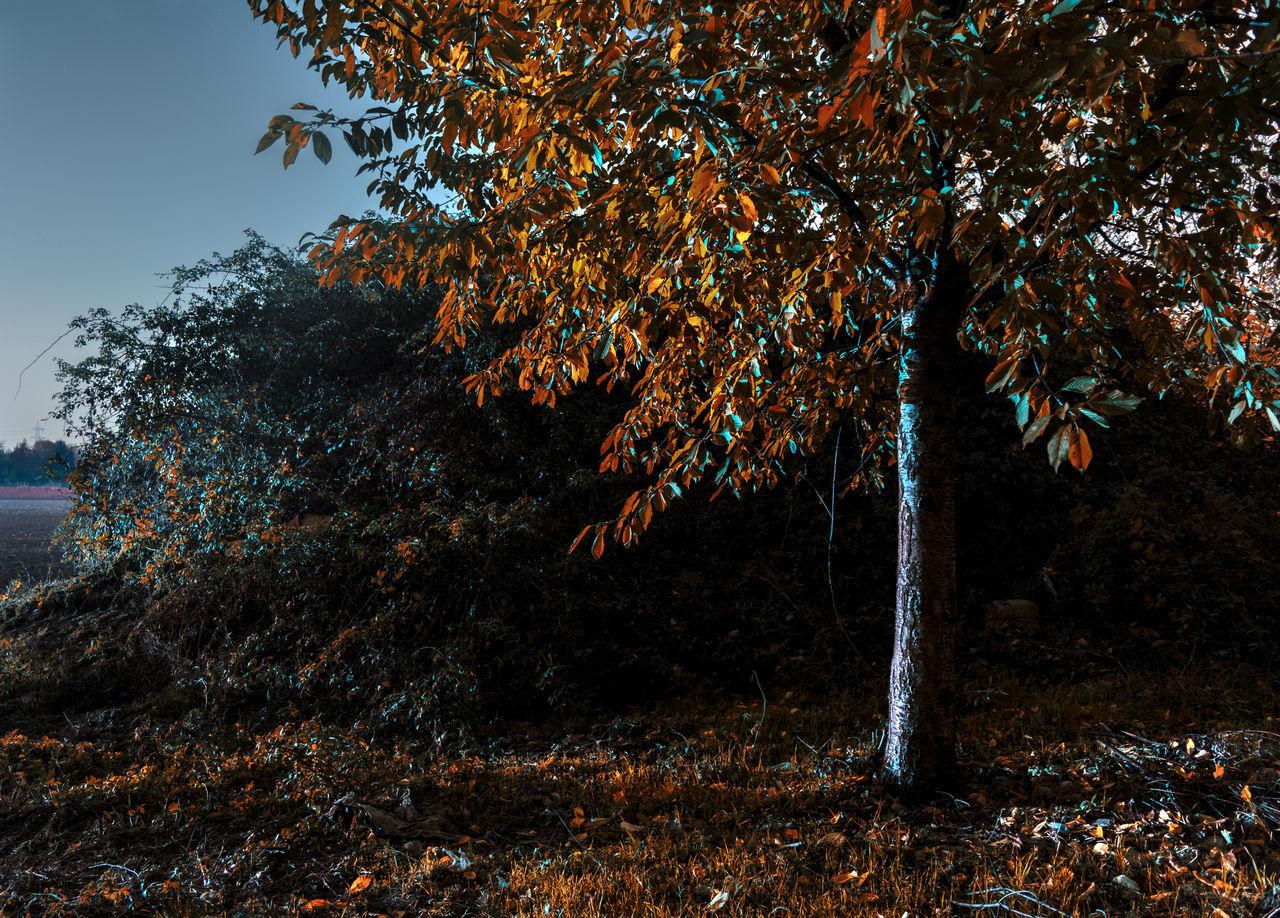 Autumn Autumn Colors Autumn Leaves Dusk Colours Dusk In The Country Dusk Light Fantasy Dreaming Orange Color Tree Twilight Twilight Sky Blue Orange