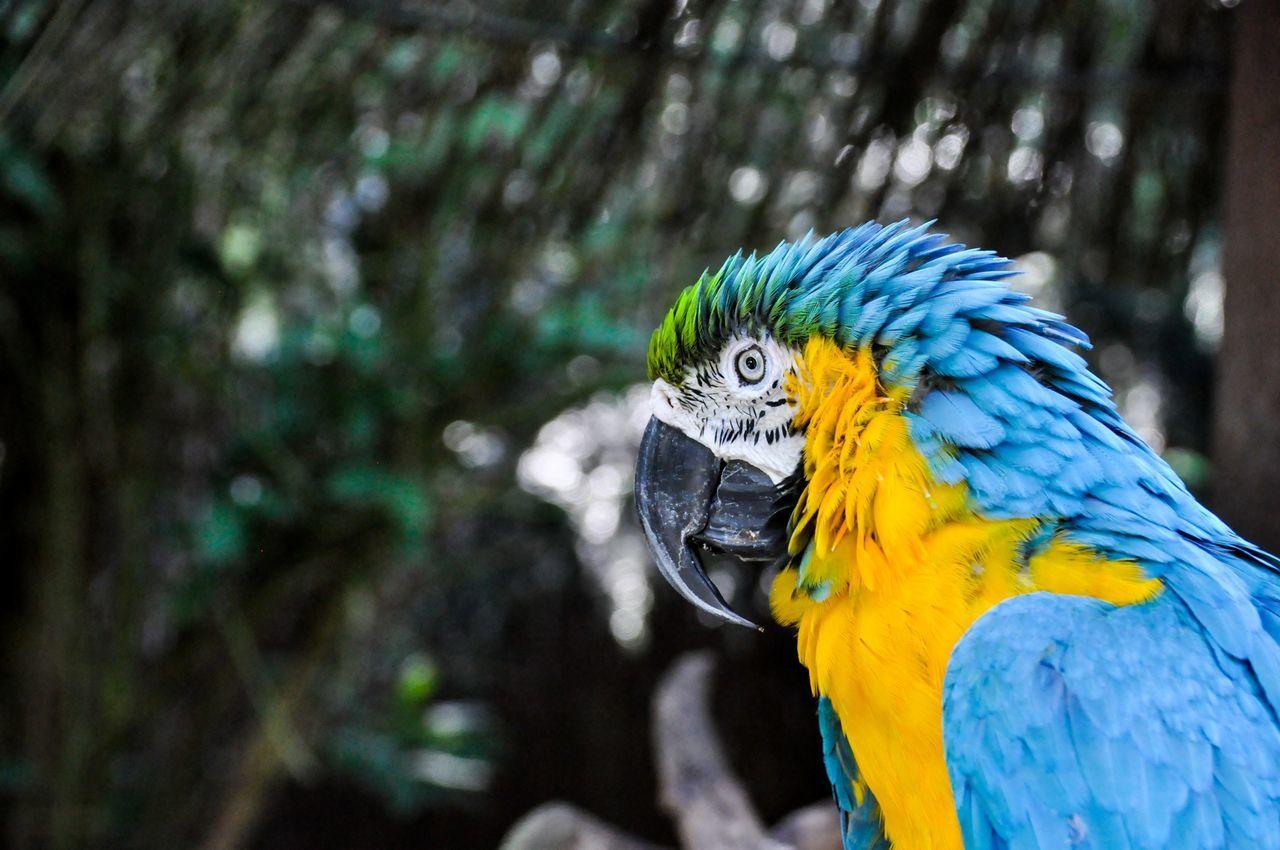 Beautiful stock photos of parrot, Animal Themes, Animal Wildlife, Animals In The Wild, Beak