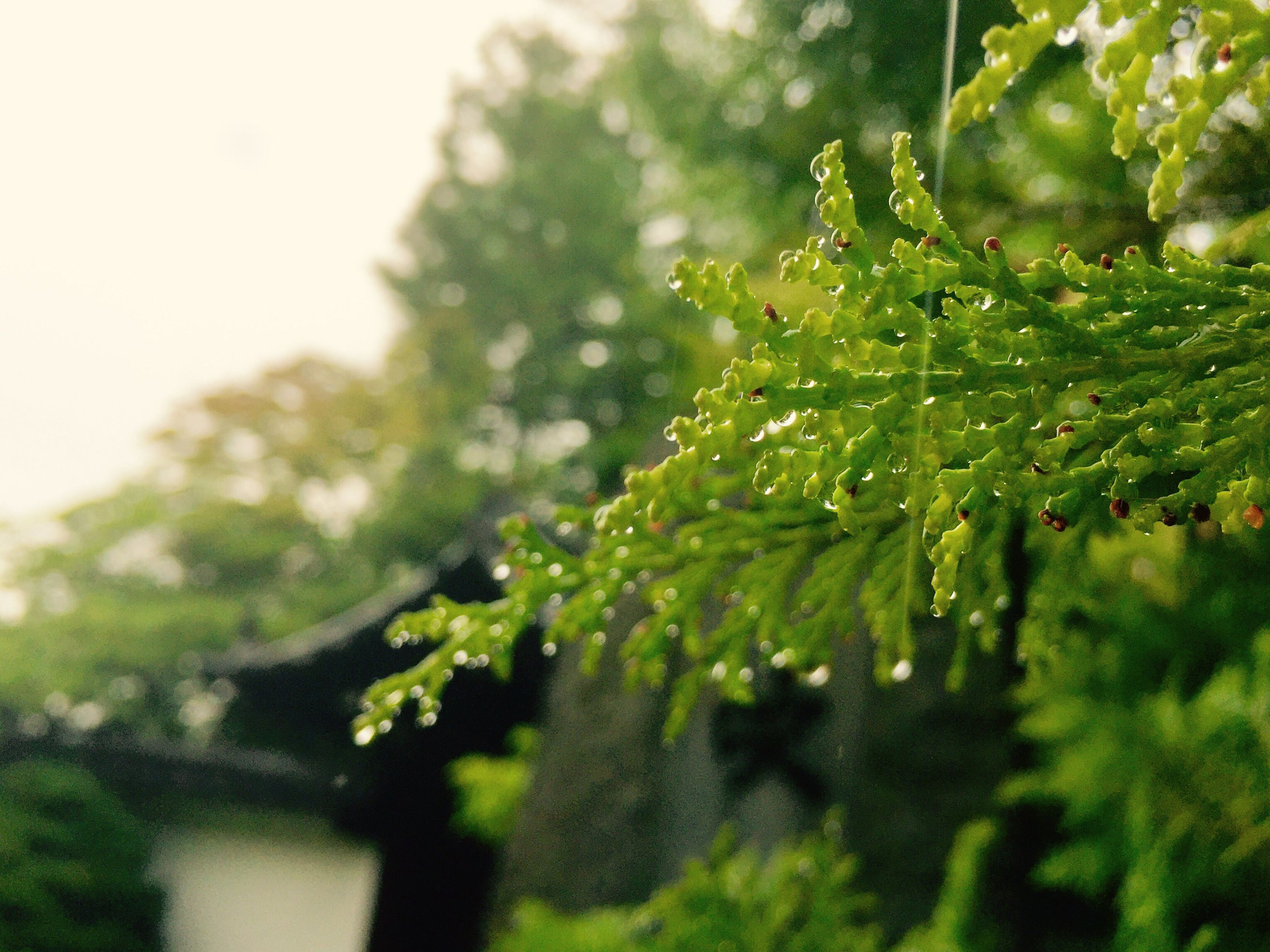 green color, growth, leaf, close-up, nature, focus on foreground, selective focus, plant, beauty in nature, tree, tranquility, freshness, branch, drop, green, day, wet, outdoors, no people, growing