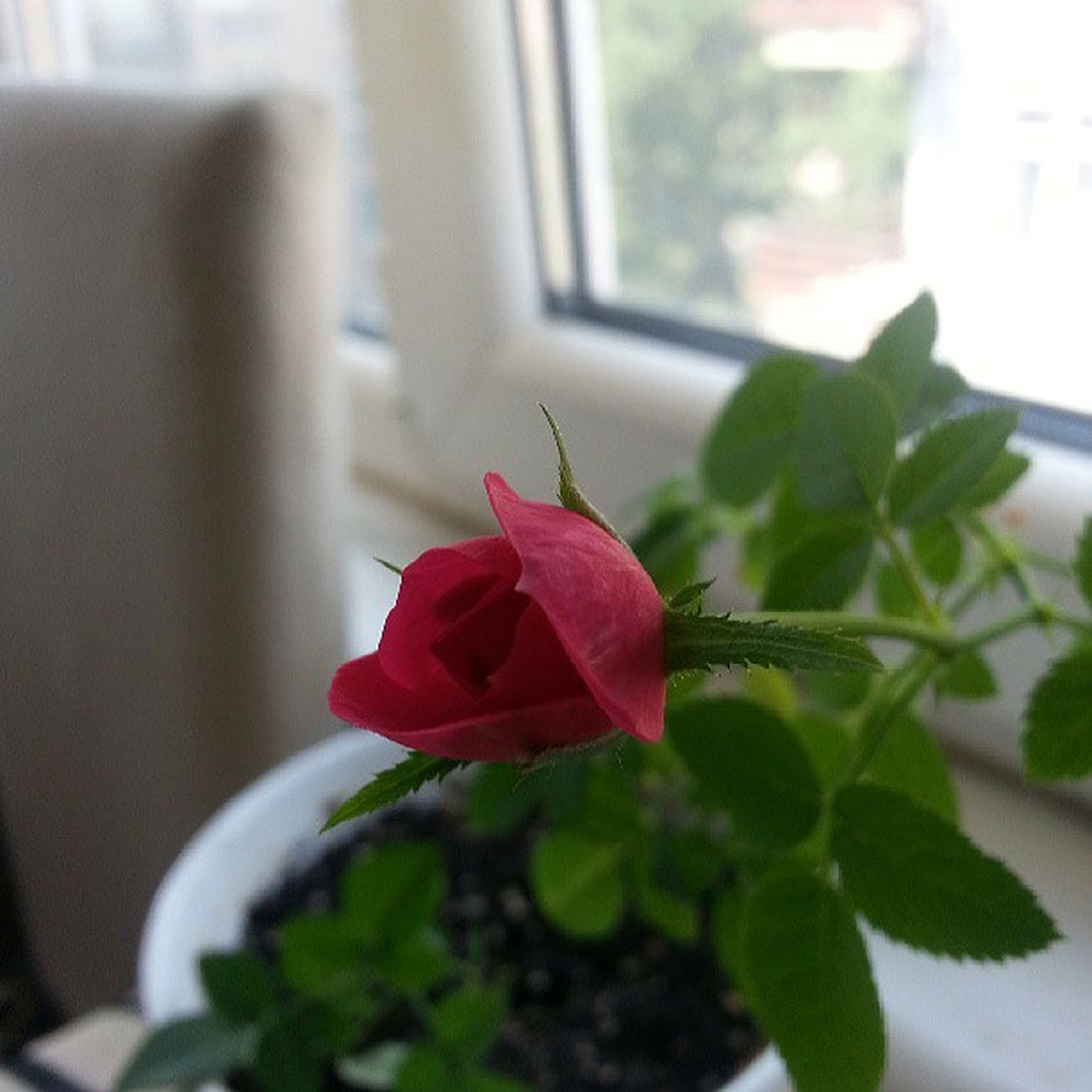 Tamamen orjinal cekim. .Instacollege Instamood Doğa Rosé spring Instagood Instapic Love ♥ Naturel Nofilter