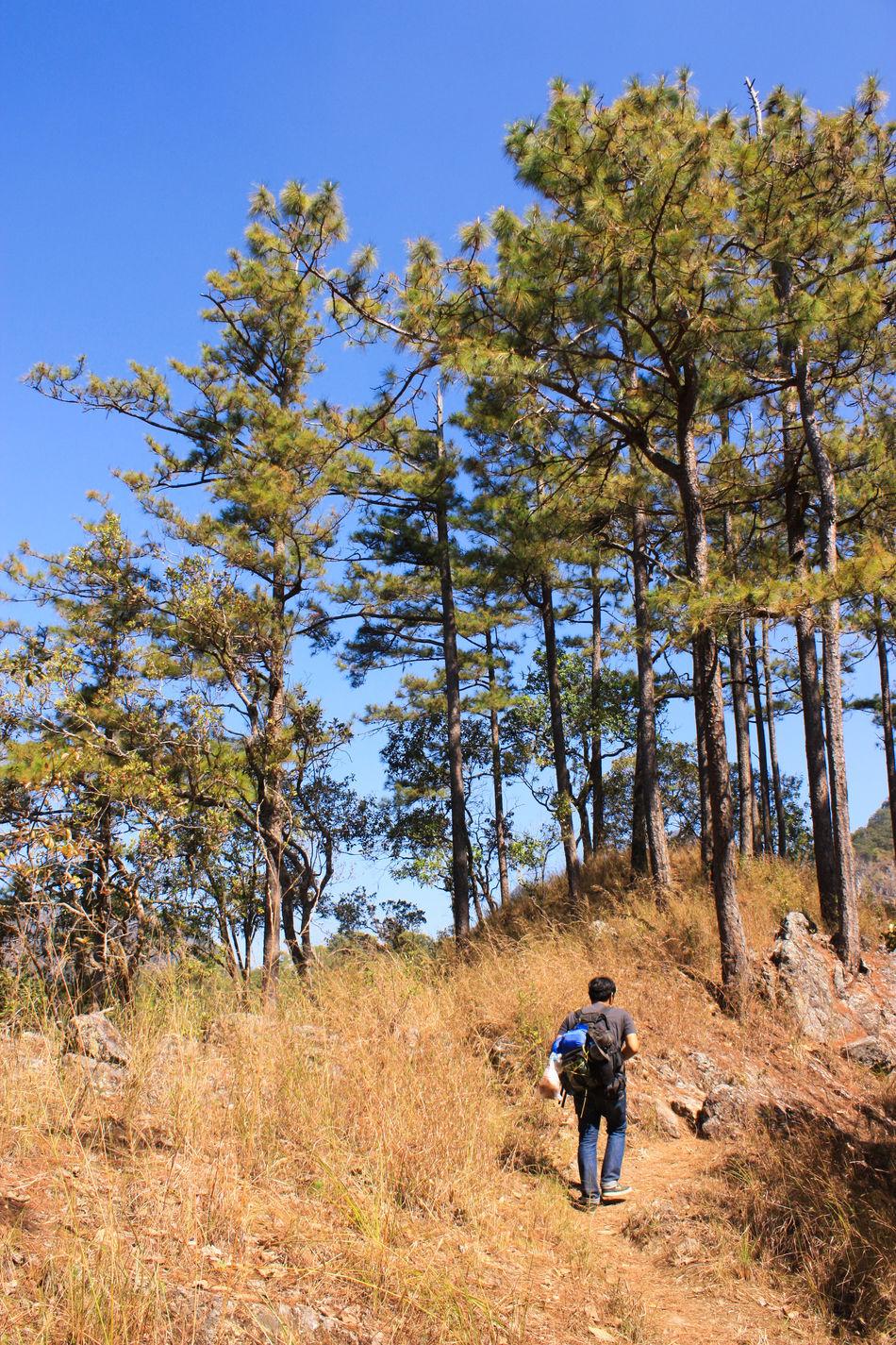 on walking. Adventure Blue Sky Camping Chiangmai Doi Luang Doi Luang, Chiang Dao Hiking Mountain Mountains Thailand Tree Trees Trekking Walking