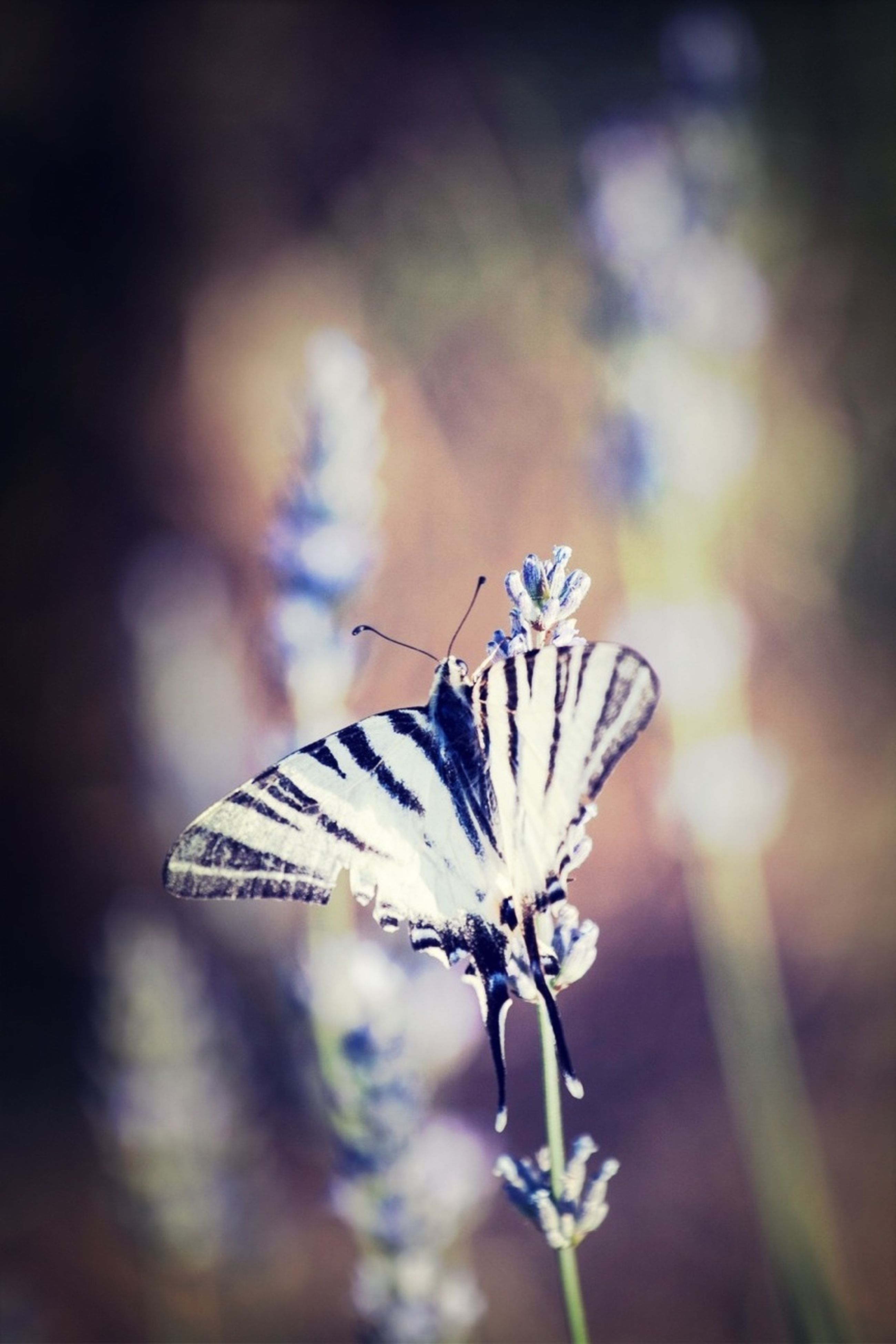insect, one animal, animals in the wild, flower, focus on foreground, animal themes, butterfly - insect, butterfly, wildlife, fragility, close-up, beauty in nature, animal wing, nature, plant, outdoors, day, white color, no people, flying