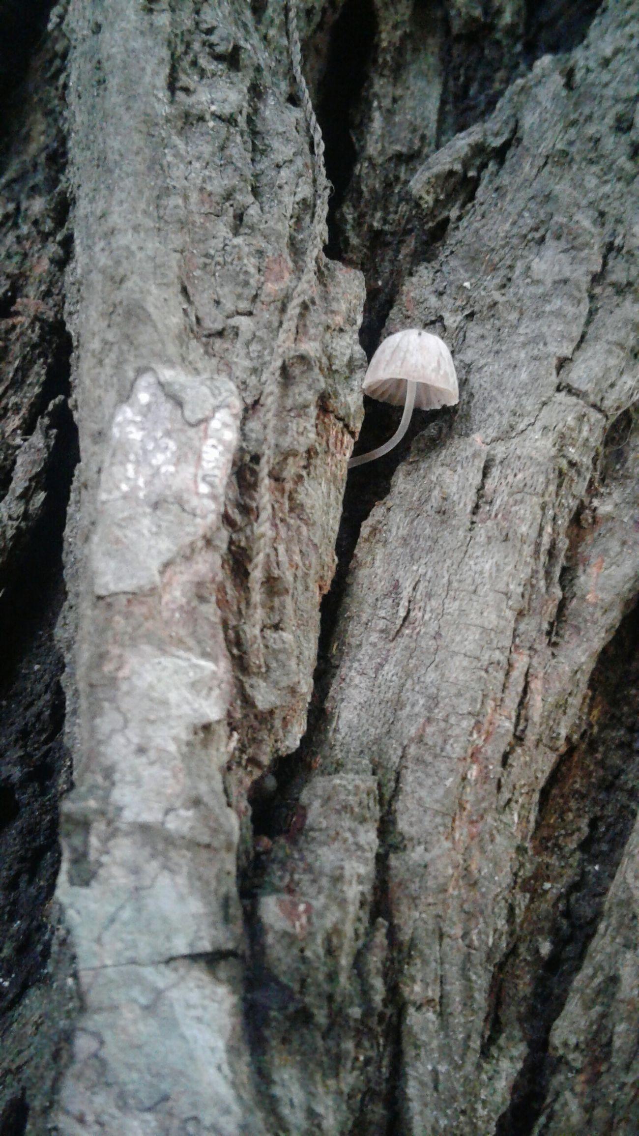 Botánica Fingí Reino Tjree