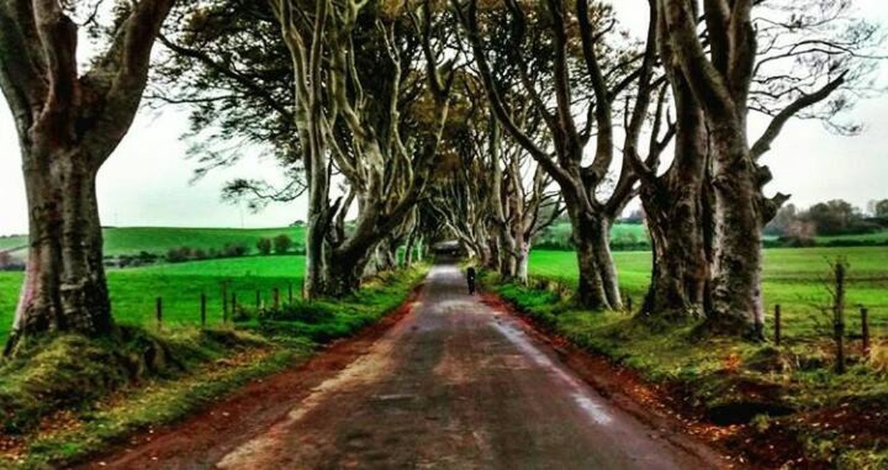 DarkHedges Forest Gameofthrones Ireland Nature Northern Ireland Trees Trip