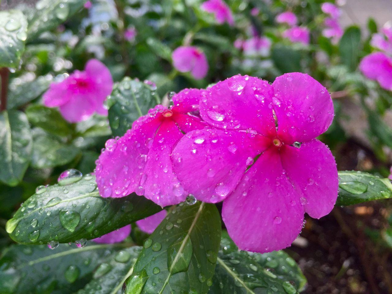 EyeEm Gallery Flowers Drops Getty X EyeEm EyeEm Best Shots Good Morning Hot Weather Cooling  EyeEm Nature Lover